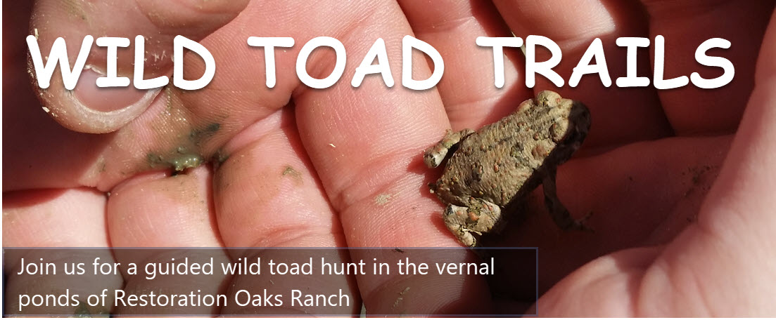 100718 Wild Toad Trails 1103x456